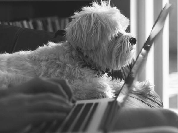 puppy icon-min